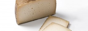export-gourmet-cheese-special-offer